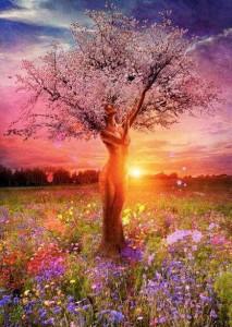 arbre-femme