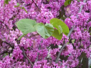 feuilles vertes sur fleurs violettes